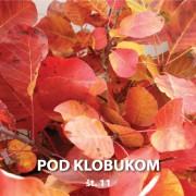 Pod Klobukom 11 Cover