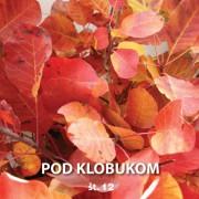 Pod Klobukom 12 Cover
