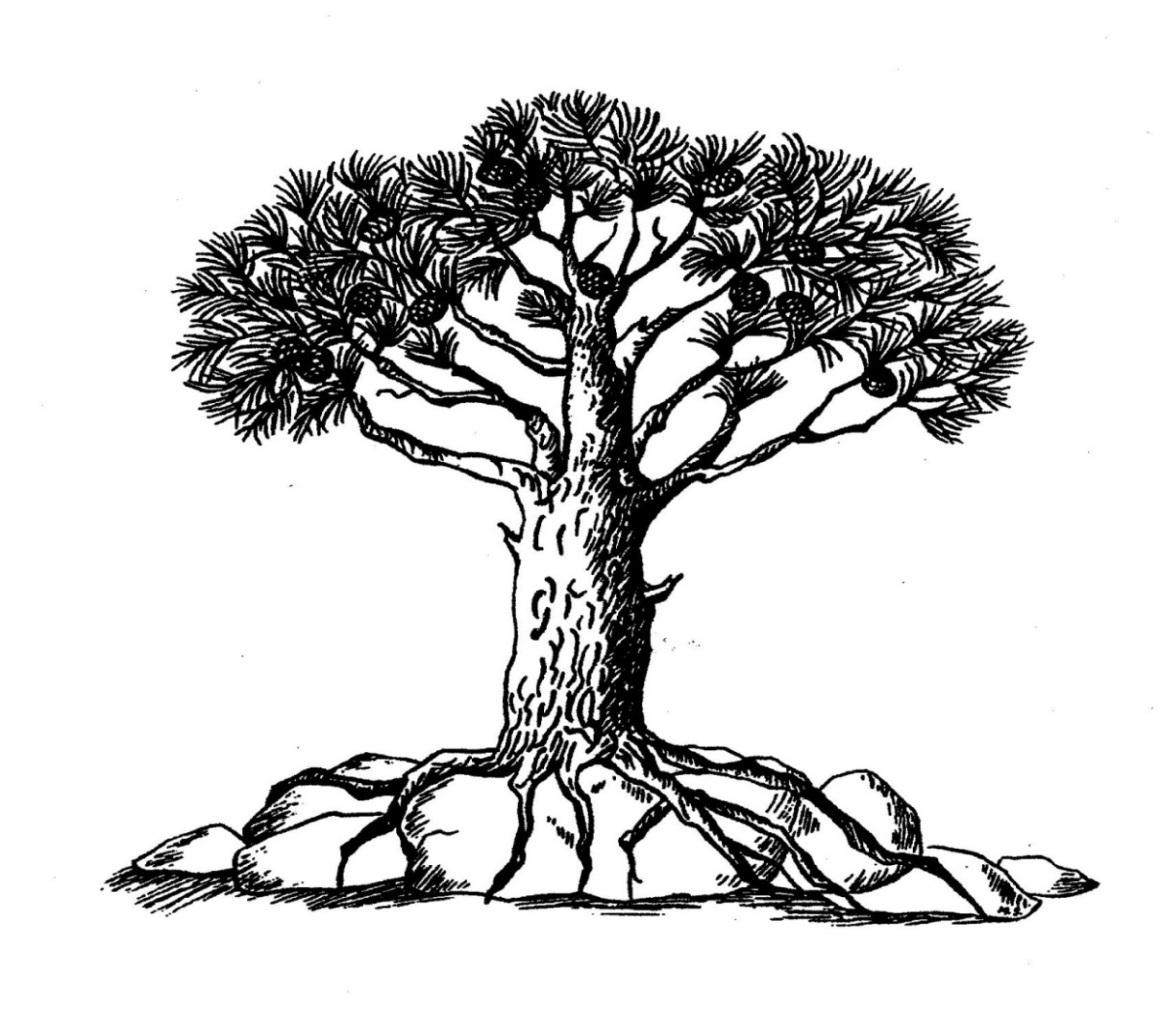 korenine